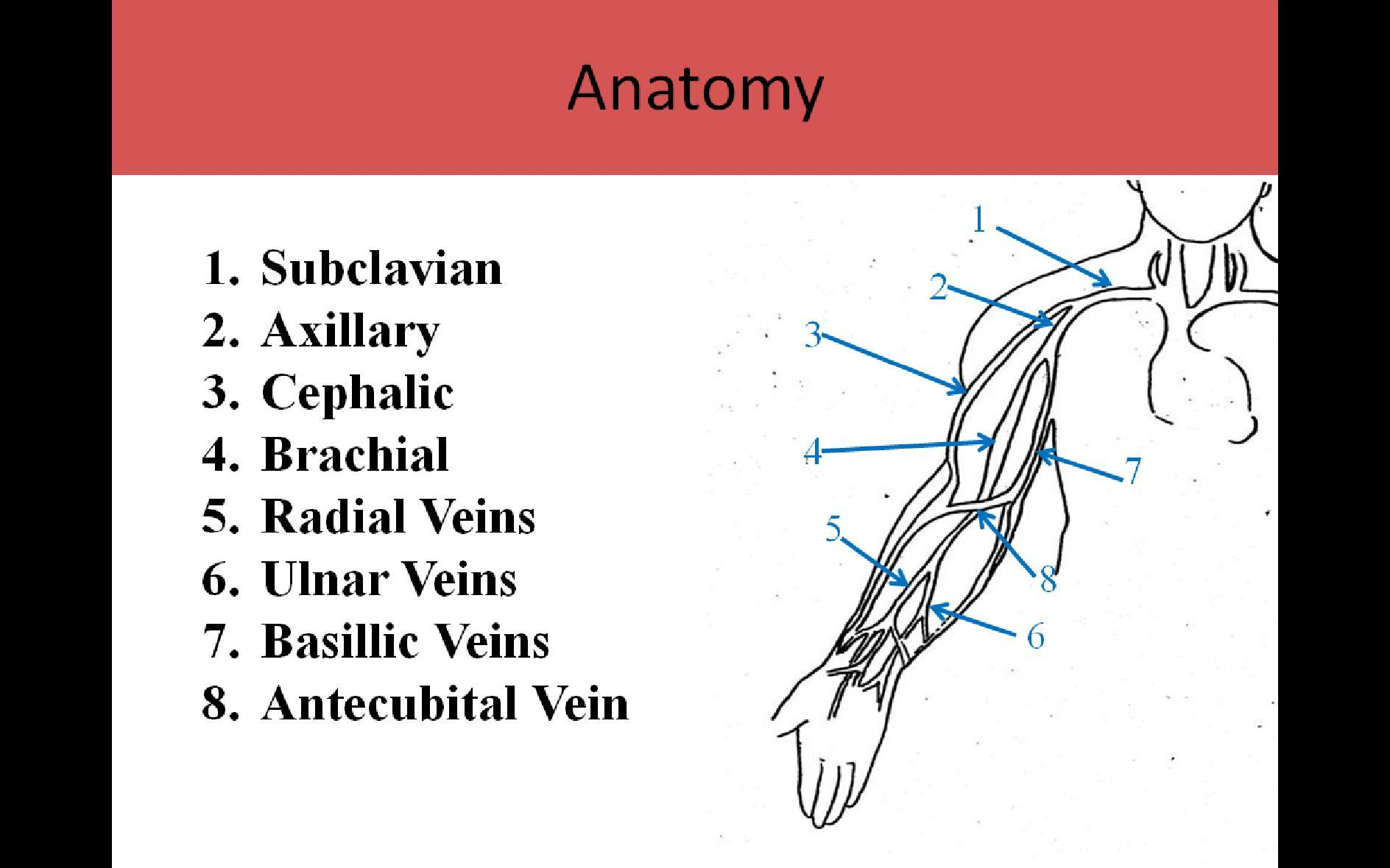 extremity venous pg1, Cephalic vein