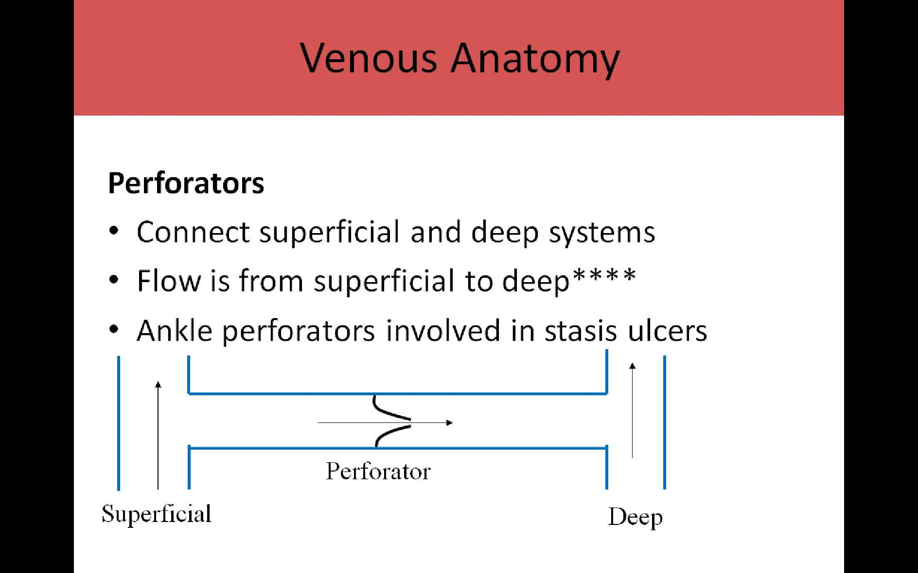 extremity venous pg1, Cephalic Vein