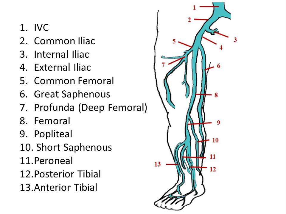Ultrasound Registry Review Extremity Venous