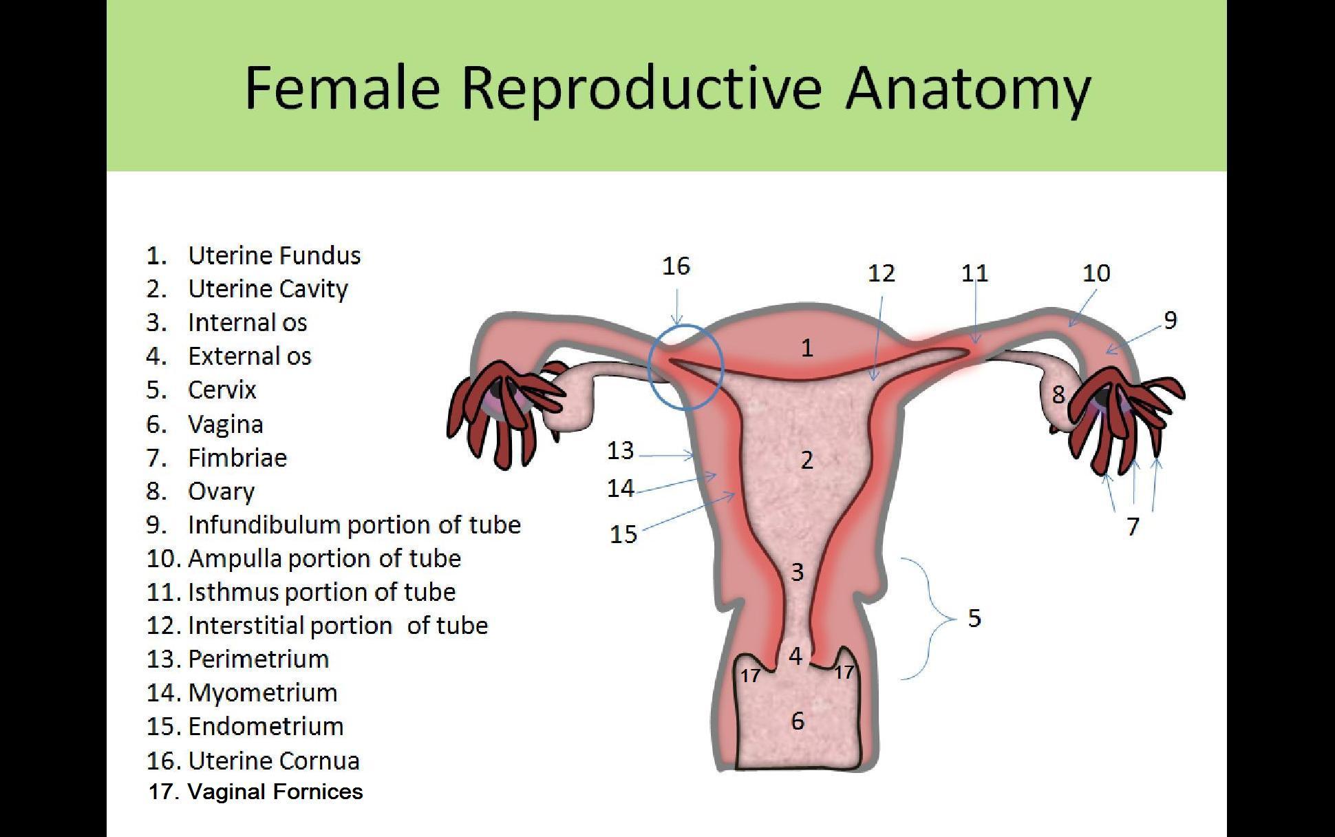 Ultrasound Registry Review - General Information